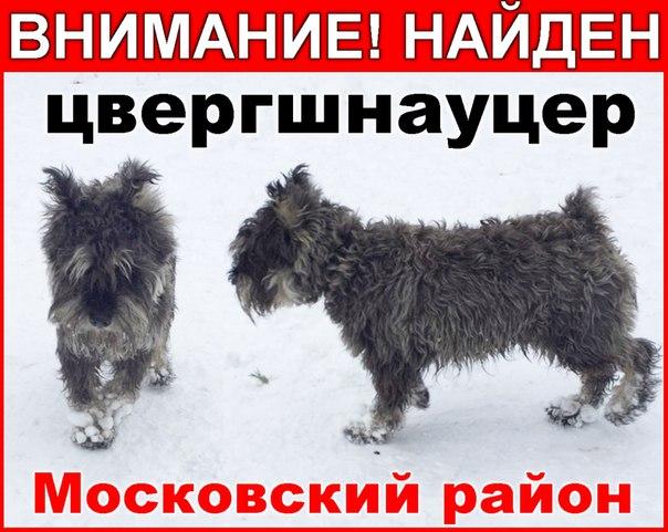 Потеряны, найдены, ищут дом - Страница 25 OtlyqdzKrEo