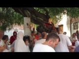 3.11.15 Яват - дерево на Котором Кришна был под окном Дворца Абхиманью