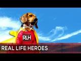 Спасший жизнь хозяина алабай из Караганды вошел во всемирный рейтинг собак-героев