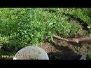 Как от грядки отрезать сорняк