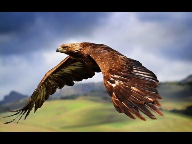 Сила хищных птиц. Документальный фильм