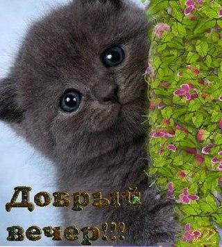 http://cs627530.vk.me/v627530150/37b84/oR_s2X5syH8.jpg
