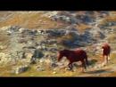 Музыкальный клип про лошадей .