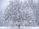 Ռուբեն Հախվերդյան Ձյունը իր երգն է երգում