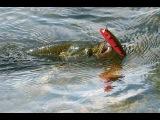 «Диалоги о рыбалке», № 82. Ловля жереха