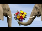 Самый добрый ролик #Совершайте добрые дела #Дарите людям добро #the kindest roller