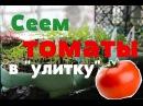 Сеем томаты в улитку . Рассада томатов. (22.02.2016).