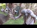 Yoda, a friendly Wild Deer Buck