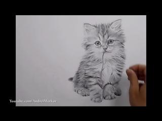 Рисунок кота карандашом (как нарисовать кота) - ускоренное видео