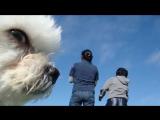 Лучшие фотобомбы с животными