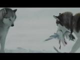 Белый плен (2006) супер фильм_____________________________________________________________________ Шпион по соседству 2010