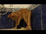 Мой кот - дурак ?