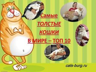 Самые ТОЛСТЫЕ КОТЫ и КОШКИ в МИРЕ - ТОП 10 Fattest cats in the world - TOP 10