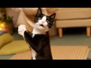До слез смешные видео про кошек