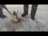 Зимняя рыбалка на щуку. Ловля щуки на жерлицу зимой.