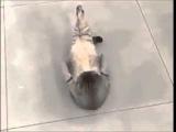 Кот отжимался, но потом устал - Cat push-ups, but then tired