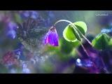 Sarah Brightman - Scene d'amour