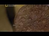 «Секретные материалы древности (02). Кровь Христа. Фестский диск» (Документальный, 2010)