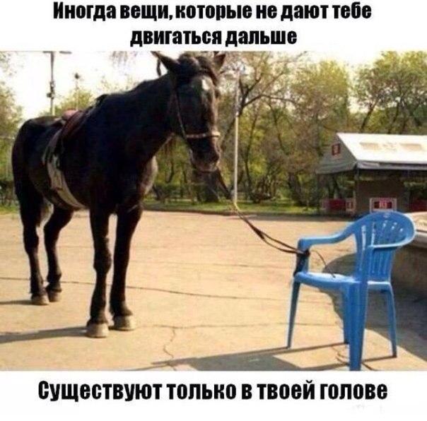 http://cs627617.vk.me/v627617566/1a745/MFQvmsB6WQY.jpg