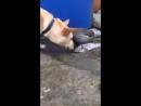 Perrito intenta salvar peces echándoles agua | R-D.U