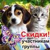 Животный мир: лошади, олени, собаки, кошки...