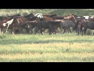 Лошади самые прекрасные создания на свете