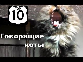 ТОП 10: СМЕШНЫЕ ГОВОРЯЩИЕ КОТЫ (март 2014) // ЛУЧШАЯ подборка СМЕШНЫХ видео с КОШКАМИ (2014)