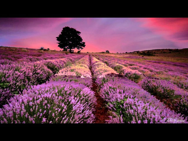The Amazing Provence Lavender Fields, France in 4K (UltraHD)