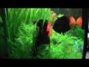 Rio 400 - 18.07.2011 - Full HD 1080p 1ere Partie.wmv