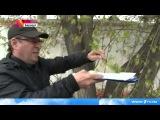 #Барнаул #подвергся настоящей #атаке #лесных #клопов  #Новости  Первый канал