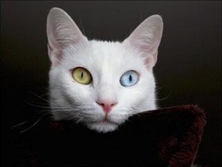 Самые дорогие кошки мира 1-7 место.