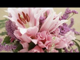 Nini Rosso- Adoro Romantic Trumpet