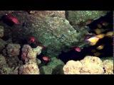 Красное море ,красивый подводный мир , Египет