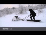 Быстрая мотособака для зимы КОЙРА 500 - отличный буксировщик для рыбалки и охоты! www.KOiRA.pro