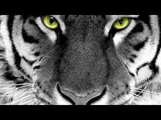 Самые опасные животные в мире - документальные фильмы 2015 документальные фильмы n...