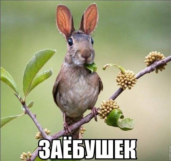 http://cs627619.vk.me/v627619977/2915e/kx75-l8iJQg.jpg