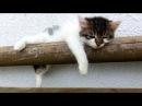 寝る子猫達(Kittens sleeping a lot)