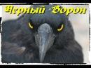 песня Черный Ворон реквием памяти павших бойцов Новороссии 2015 г