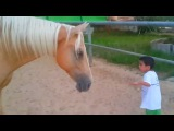 Young horse creates a bond with a 4 years old child with a Williams syndrome