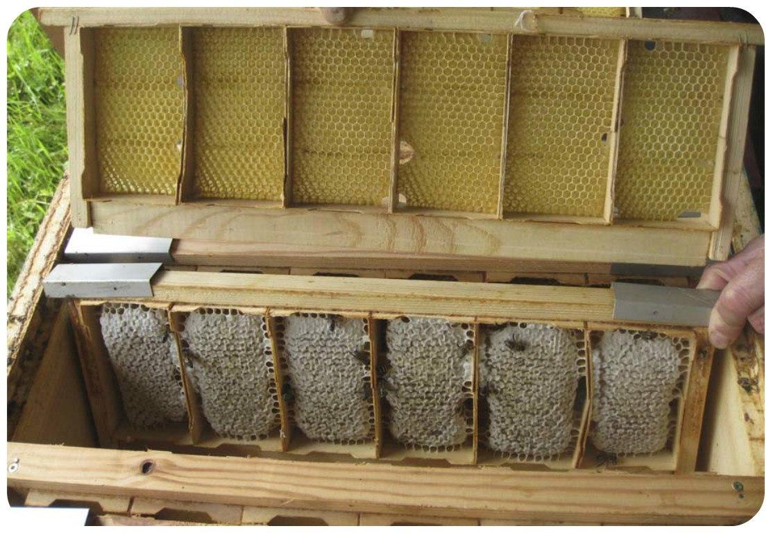 Рамки для сотового меда своими руками