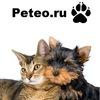 Peteo. Купить,продать,собака,щенок,кошка,котенок