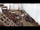 Содержание уток зимой в теплице. Видео по запросу.