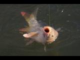 Главные секреты карповой рыбалки. ПВА-сетки и другие интересности