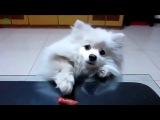Лучшая подборка приколов с собаками, смешной пес,веселые животные 2014, лучшие приколы, новое  2014