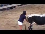Девушка знает как усмирить быка