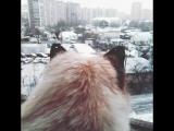 кот и снег ^^
