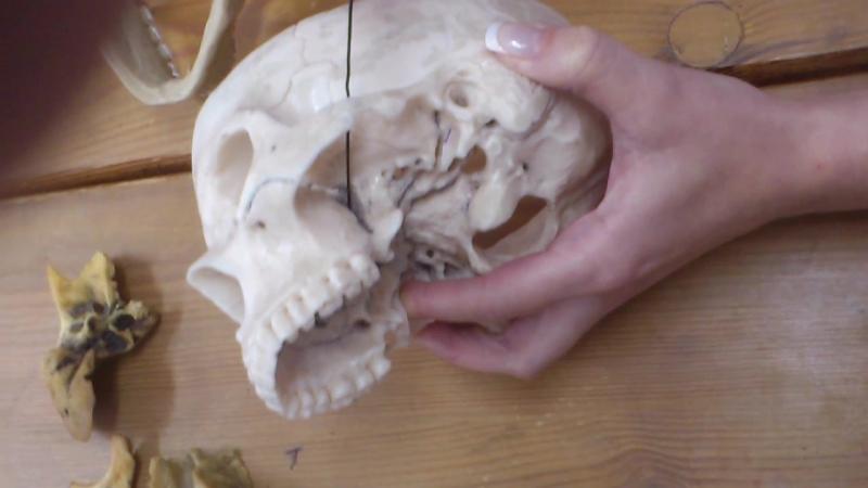 череп(крыловидно-небная ямка)