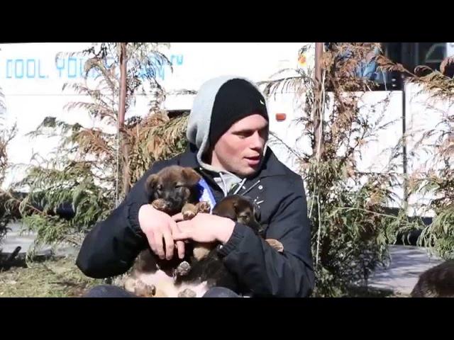 Год Собаки ещё впереди - 2-е новолуние после зимнего солнцестояния