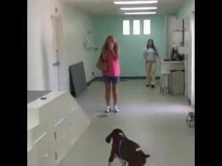Successful surgery, dog walks for first time and is greeted by overwhelmed owner