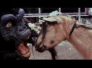 The Black Dahlia Murder Goat of Departure OFFICIAL VIDEO
